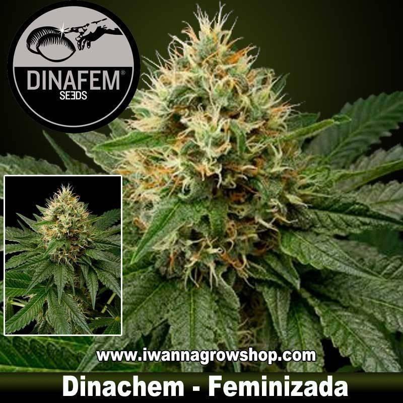 Dinachem de Dinafem