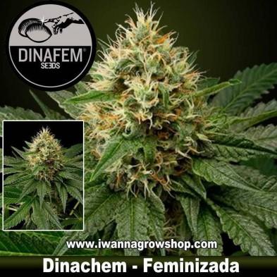 Dinachem - Dinafem - Feminizada
