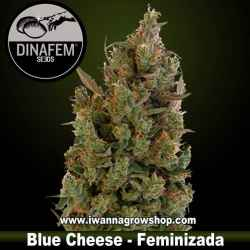 Blue Cheese – Feminizada