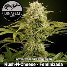 Kush n Cheese - Dinafem - Feminizada