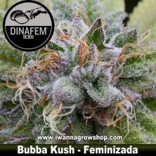 Bubba Kush – Feminizada – Dinafem Seeds