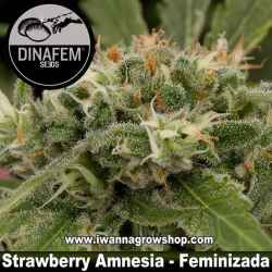 Strawberry Amnesia – Feminizada – Dinafem Seeds