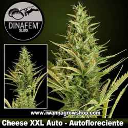 Cheese XXL Auto – Autofloreciente – Dinafem Seeds