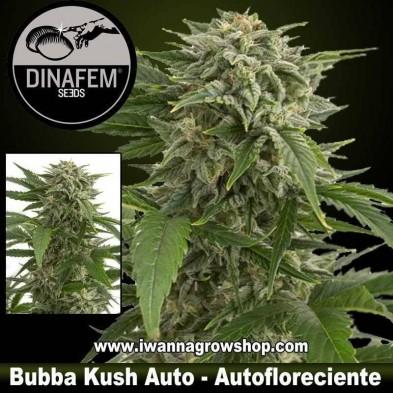 Bubba Kush Auto