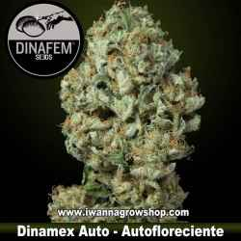 Dinamex Auto