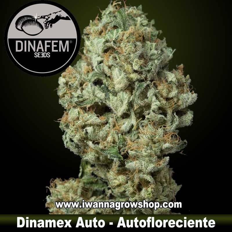 Dinamex Auto – Dinafem - Autofloreciente