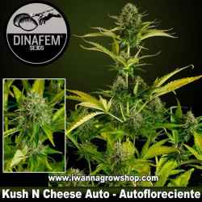 Kush N Cheese Auto