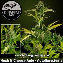 Kush N Cheese Auto - Dinafem - Autofloreciente
