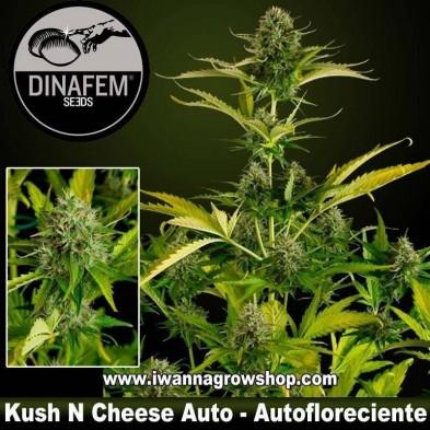 Kush N Cheese Auto – Autofloreciente – Dinafem Seeds