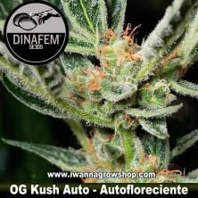 OG Kush Auto – Dinafem - Autofloreciente