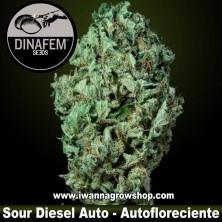 Sour Diesel Auto – Dinafem - Autofloreciente