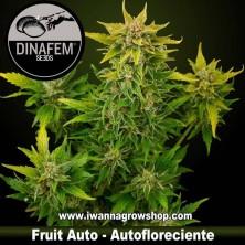 Fruit Auto - Dinafem - Autofloreciente
