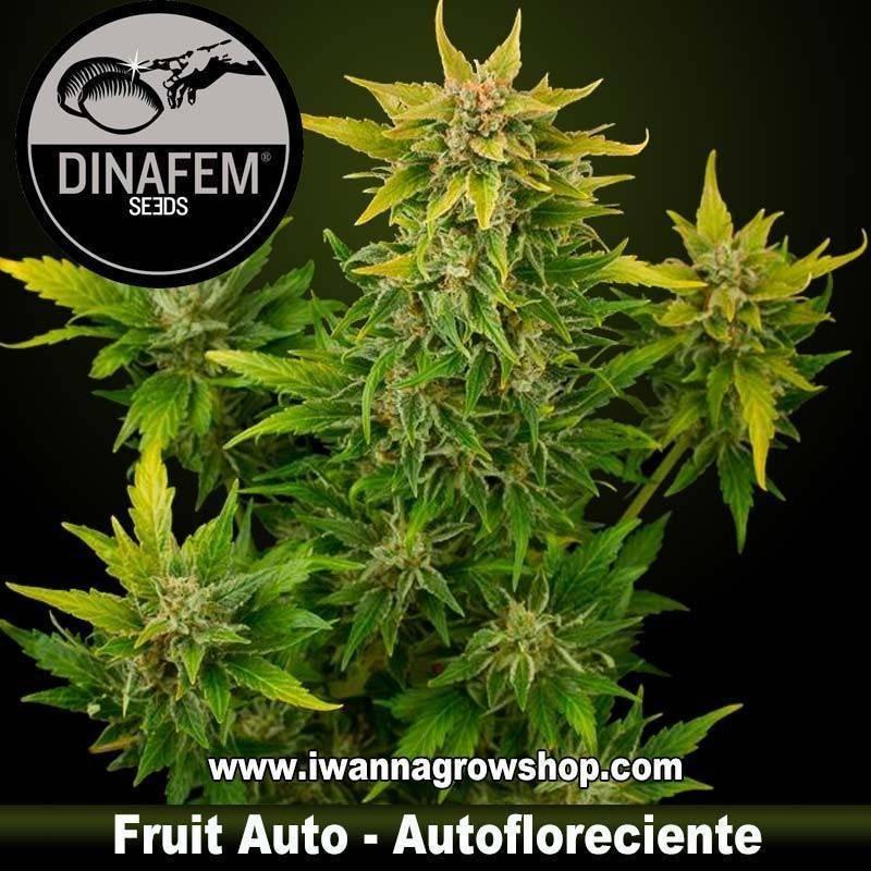 Fruit autofloreciente