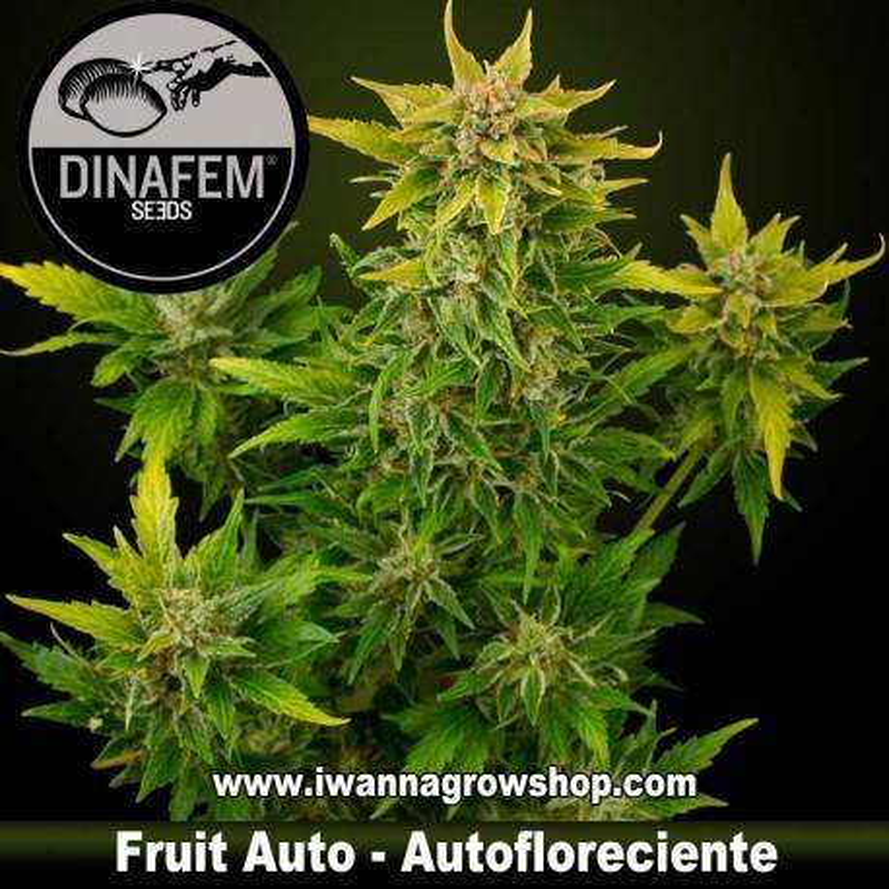 Fruit autofloreciente Dinafem 1, 3, 5 y 10 u.