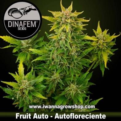 Fruit Auto – Autofloreciente – Dinafem Seeds