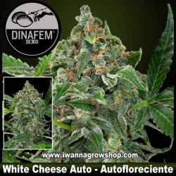 White Cheese Auto - Dinafem - Autofloreciente