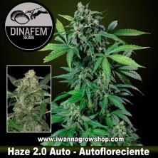 Haze 2.0 autofloreciente - Dinafem - 1, 3, 5 y 10 u.