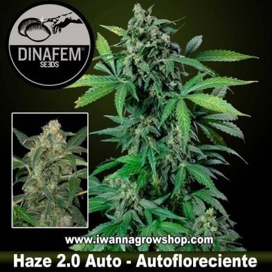 Haze 2.0 Auto – Autofloreciente – Dinafem Seeds
