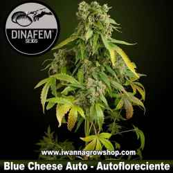 Blue Cheese - Dinafem - Autofloreciente