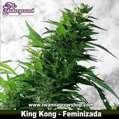 King Kong – Feminizada – DR Underground