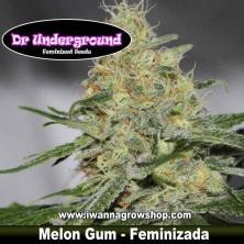 Melon Gum – Feminizada – DR Underground
