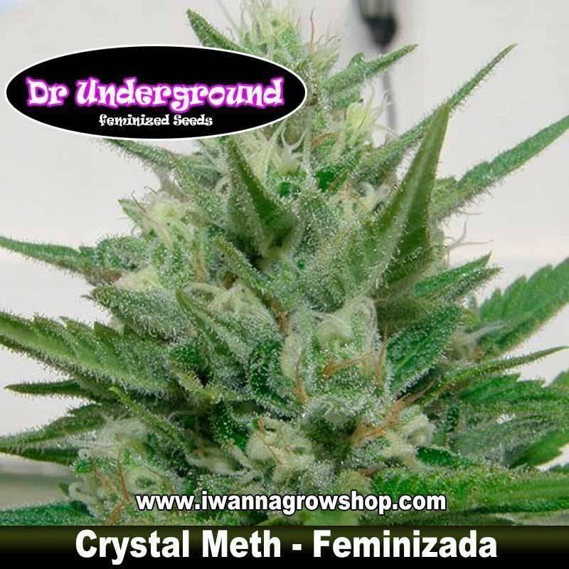 Crystal Meth Dr. Underground