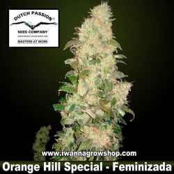Orange Hill Special – Feminizada – Dutch Passion