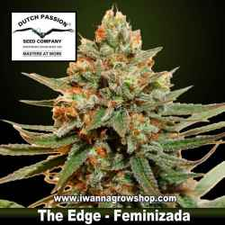 The Edge – Feminizada – Dutch Passion