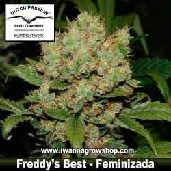 Freddy's Best – Feminizada – Dutch Passion