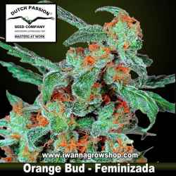 Orange Bud Feminizada - Dutch Passion - 3, 5 y 10 u.