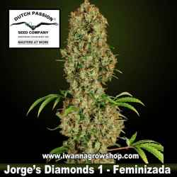 JORGE'S DIAMONDS | DUTCH PASSION | Feminizada | Indica