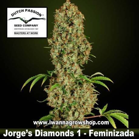 Jorge's Diamonds 1