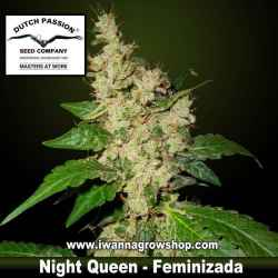 NIGHT QUEEN | DUTCH PASSION | Feminizada | Indica