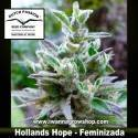 Hollands Hope – Feminizada – Dutch Passion