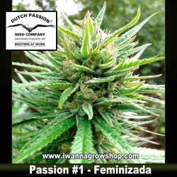 PASSION 1 | DUTCH PASSION | Feminizada | Indica