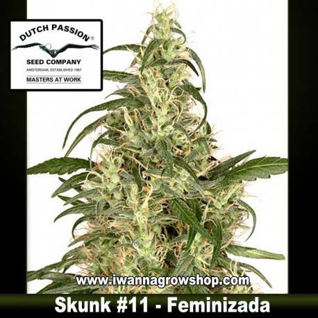 Skunk 11 Feminizada - Dutch Passion - 3, 5 y 10 u.