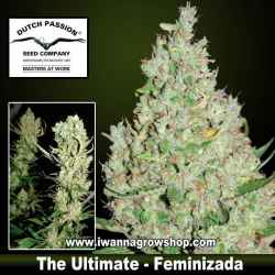 THE ULTIMATE | DUTCH PASSION | Feminizada | Indica-Sativa
