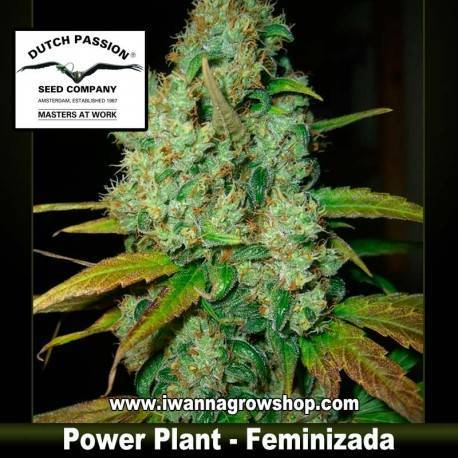 Power Plant Feminizada - Dutch Passion - 3, 5 y 10 u