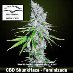 CBD Skunk Haze – Feminizada – Dutch Passion