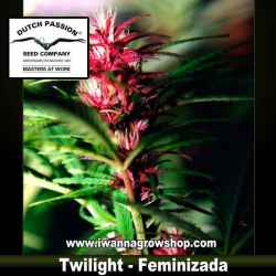 Twilight – Feminizada – Dutch Passion