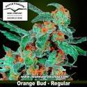 Orange Bud – Regular – Dutch Passion