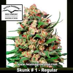 SKUNK 1 (REGULAR) de DUTCH PASSION - semilla (SATIVA)