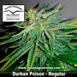 DURBAN POISON (REGULAR) de DUTCH PASSION - semilla (SATIVA)