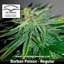 Durban Poison – Regular – Dutch Passion