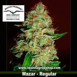 MAZAR (REGULAR) de DUTCH PASSION - semilla (SATIVA)