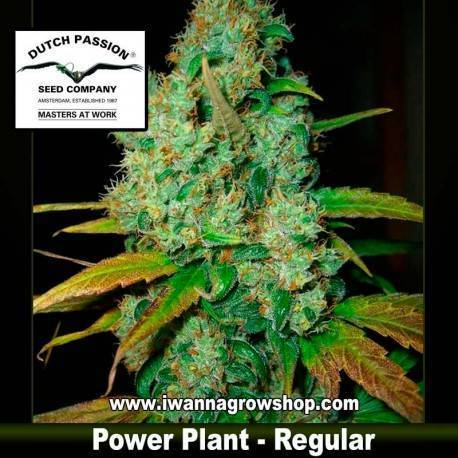 POWER PLANT (REGULAR) de DUTCH PASSION - semilla (SATIVA)