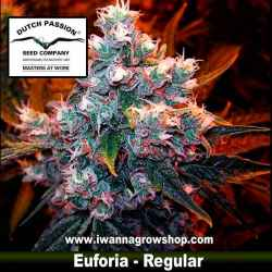 EUFORIA (REGULAR) de DUTCH PASSION - semilla (INDICA)
