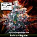 EUFORIA de DUTCH PASSION | Regular | Indica