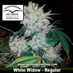 WHITE WIDOW de DUTCH PASSION | Regular | Indica