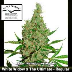 White Widow x The Ultimate – Regular – Dutch Passion